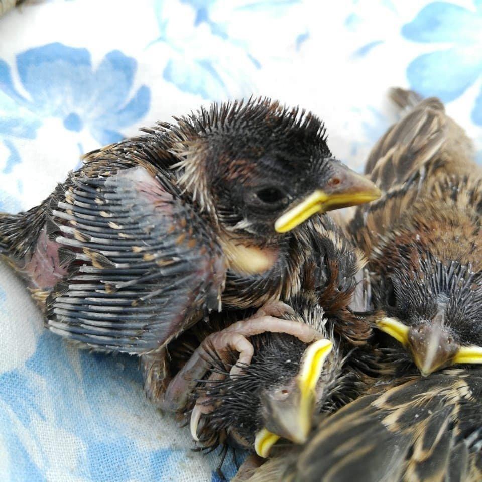 это картинки гибель птенцов есть чудес